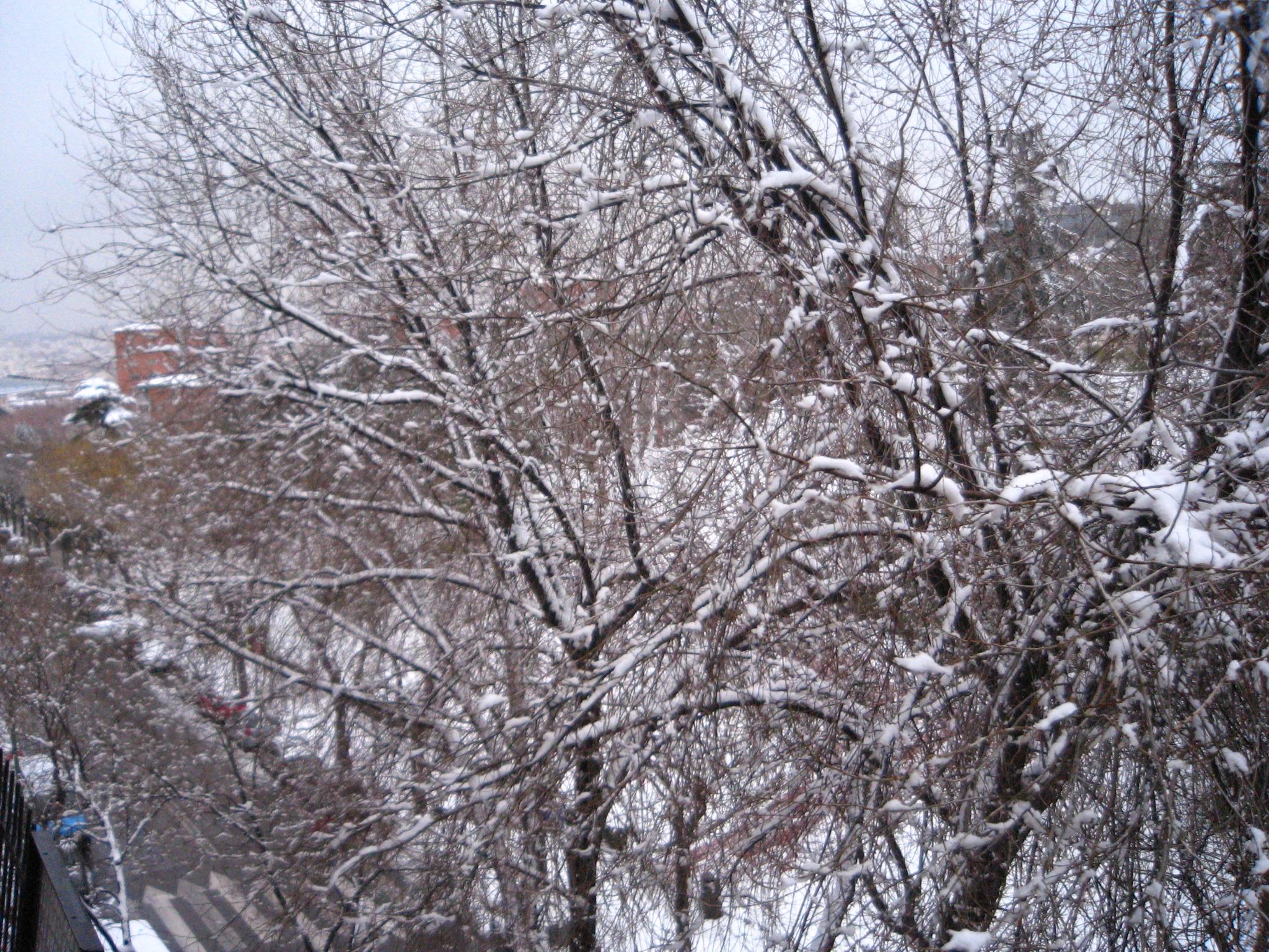 nieve 3